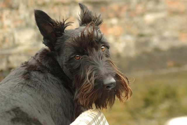 3. Daisy (lovestruck/flickr)
