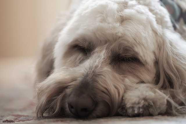 1. Max (mfhaitt/flickr)