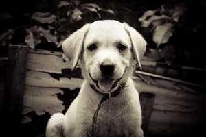 5. Cody (monggoy/flickr)