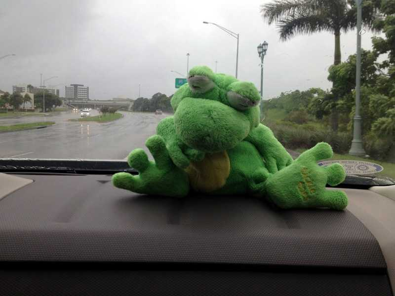 Cathleen's lucky frog got her there safely!