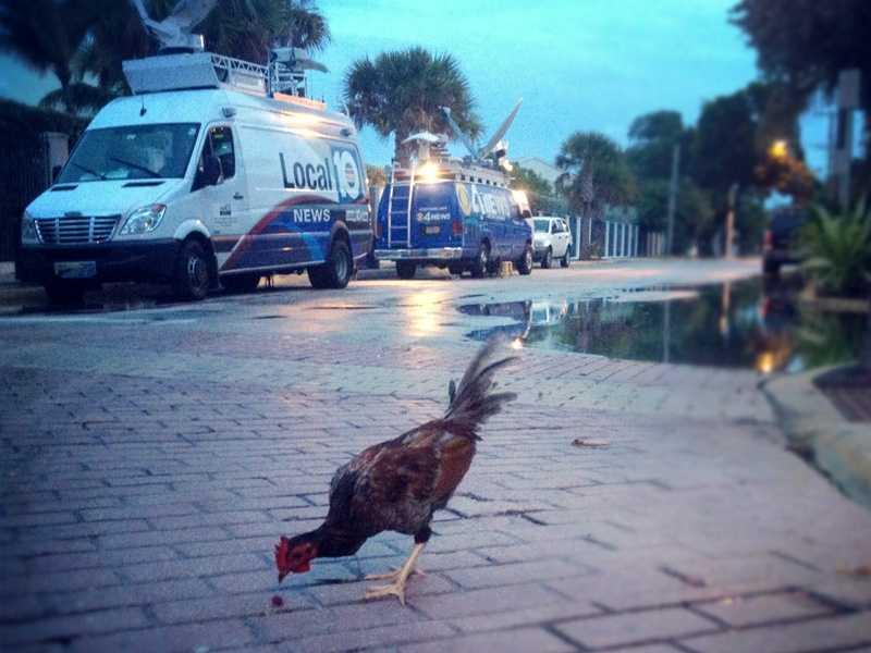 Randy Gyllenhaal is in Key West, and it looks like he's got company!