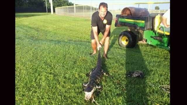 Rick Kramer finally caught the gator that has twice managed to break free from his line.