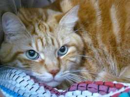 75. Daisy (Photo: sj1/u local)