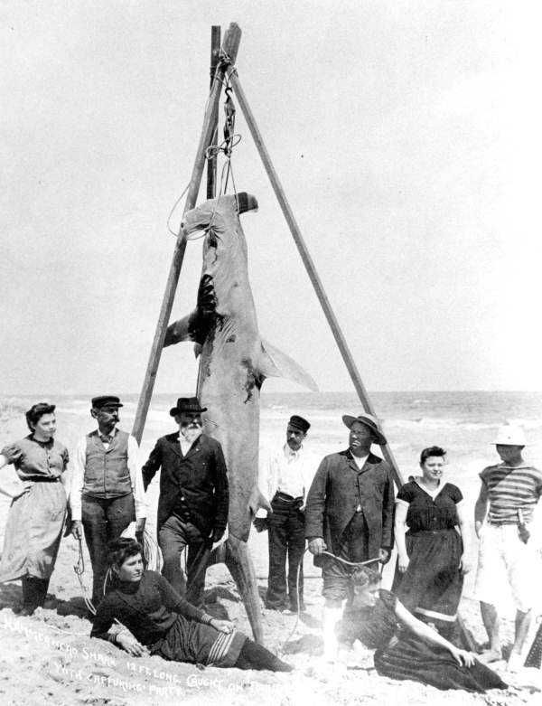 In March 18, 1893, a group caught a Hammerhead shark in Palm Beach.