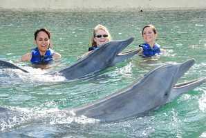 Swim with dolphins. (Photo: missbrittjpg/flickr)