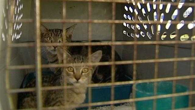 Animal Care and Control investigators say more than 100 cats, some of them dead, were found inside a very nasty inhumane enviroment in Lake Worth.