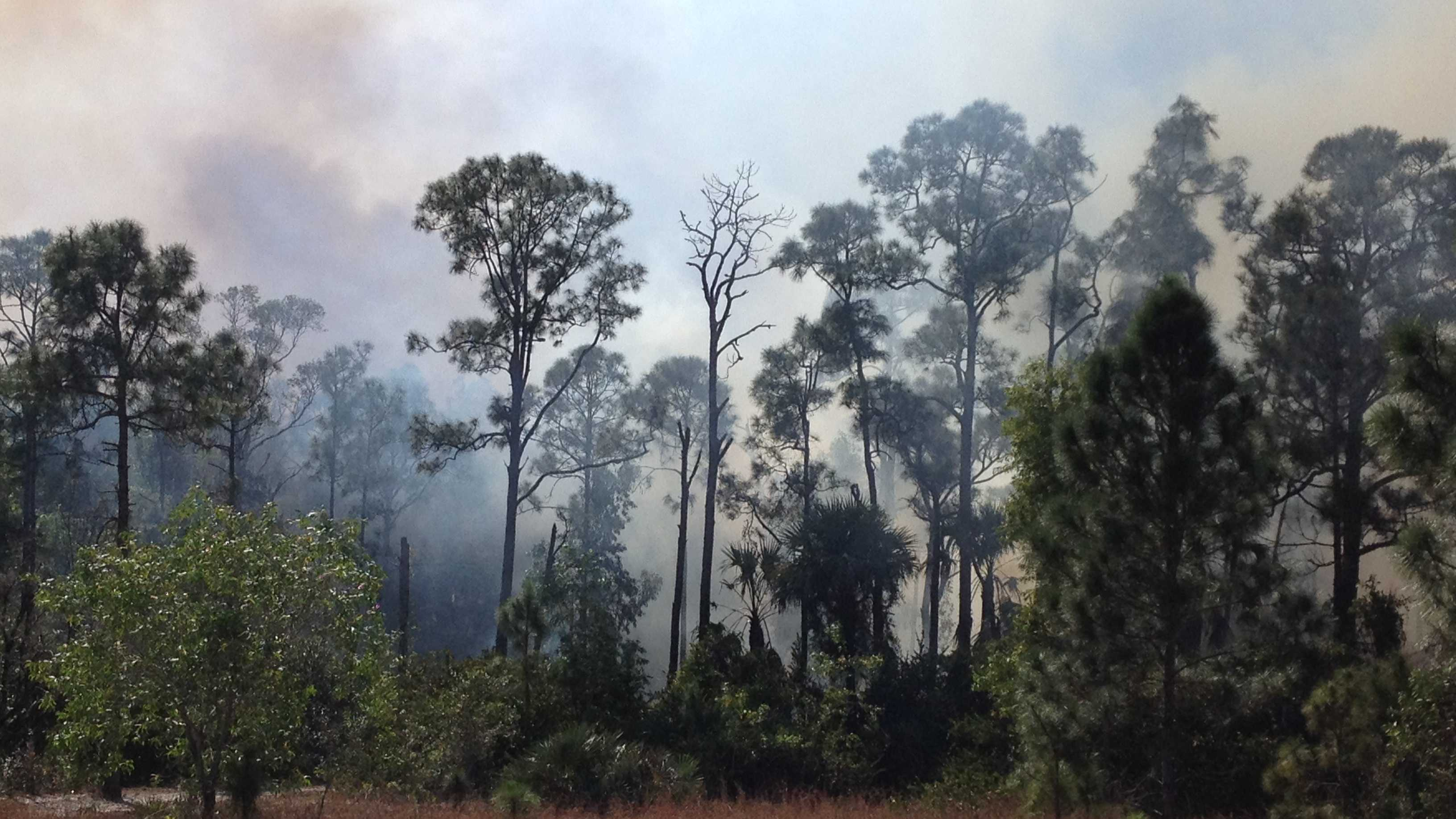 This brush fire sparked near Okeeheelee Community Middle School in Greenacres.
