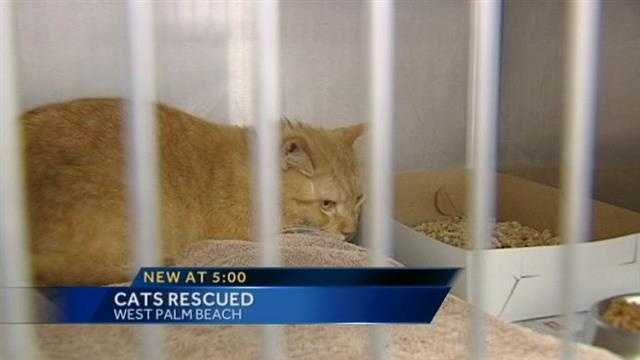 Animal Care and Control officers seize 51 cats from a home on Sunset Road in West Palm Beach.