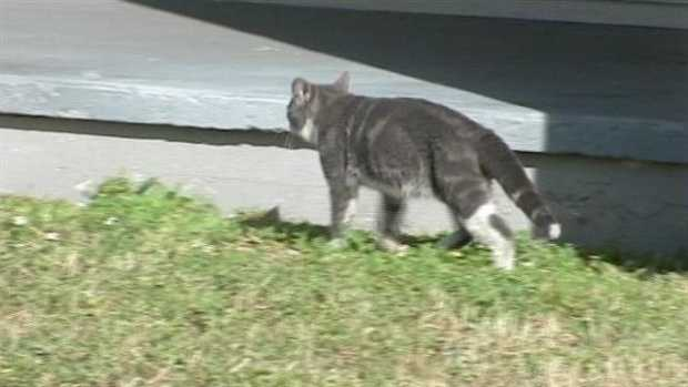 A small business owner was almost evicted for feeding stray cats. (WPBF File Photo)