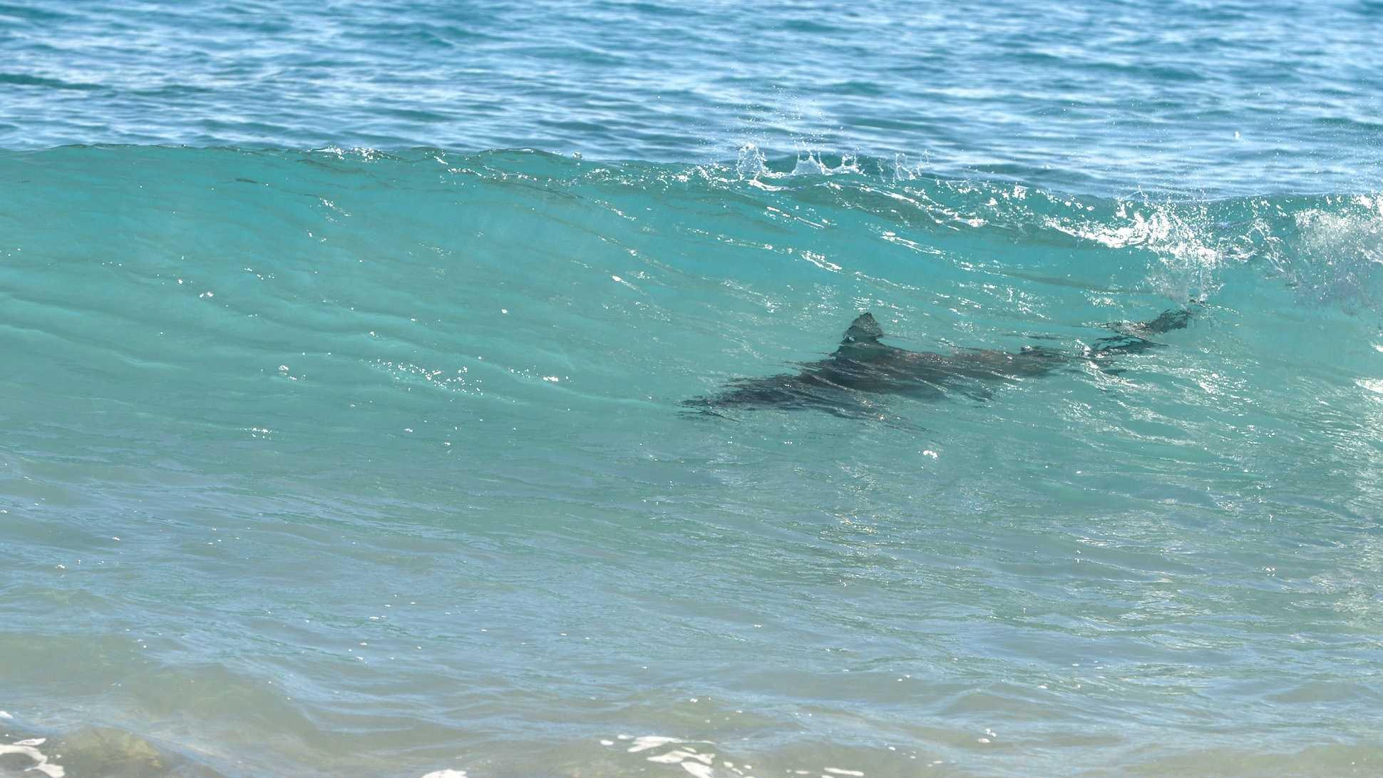 030513 Sharks 4.jpg