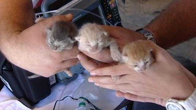 These are just some of the kittens that were rescued from a fire behind an abandoned house in Lake Worth.