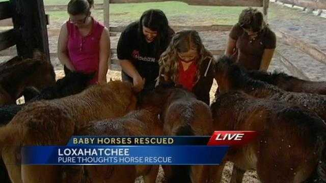 Eight orphan foals that likely would have been put to death have been given a second chance at life at Pure Thoughts Horse Rescue in Loxahatchee.