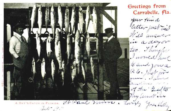 Fisherman showing off their catch in Carrabelle, Florida in 1906.