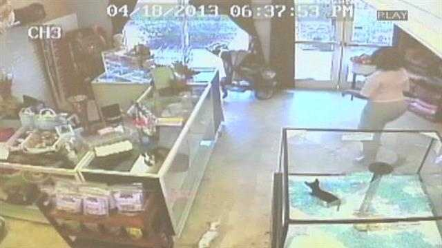 img-Caught on camera Woman steals puppy