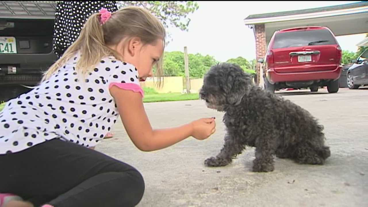 Owners try to help blind dog see again