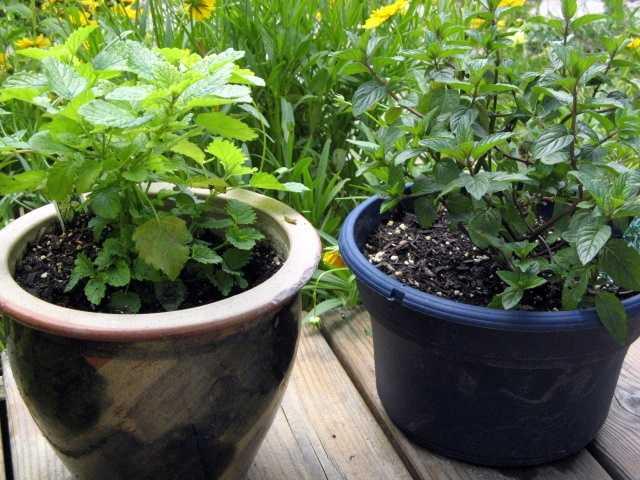 August 29: More Herbs, Less Salt Day