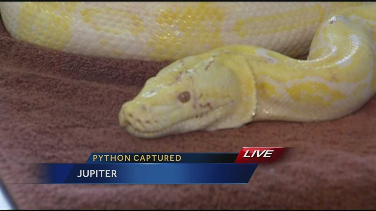 One woman told WPBF 25 News on Tuesday that she was too afraid to take a picture of the python, so she handed her camera to another witness.