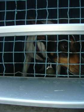 This is one of the three dogs taken into custody by Okeechobee County Animal Control.