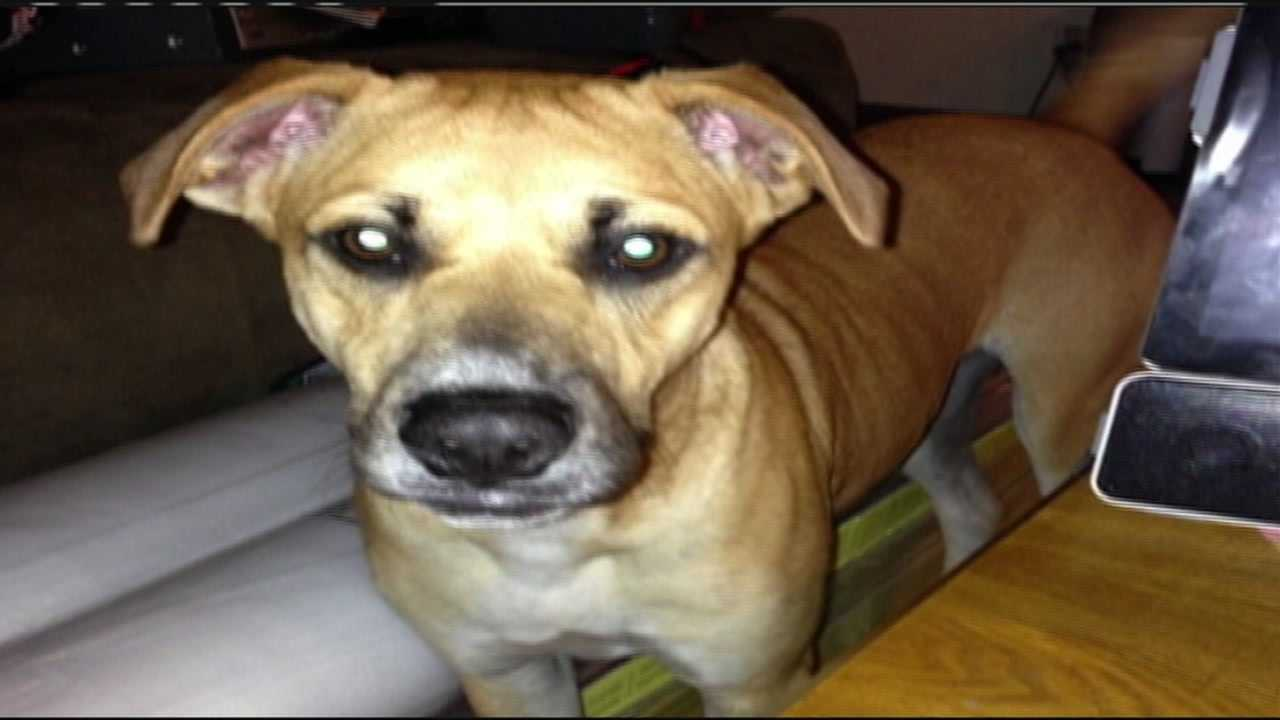 A Jupiter man says he believes a landscaper working next door killed his dog, Lilly.