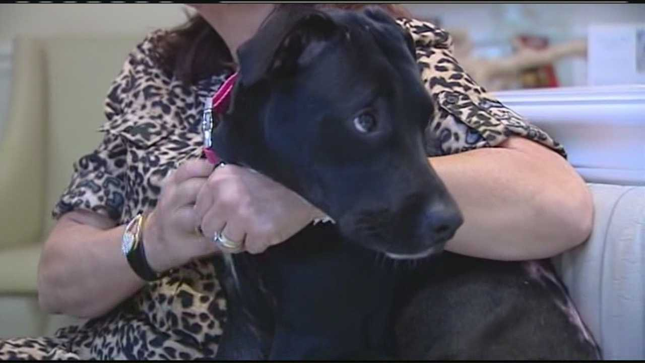 acid-burned dog Hope gets new home