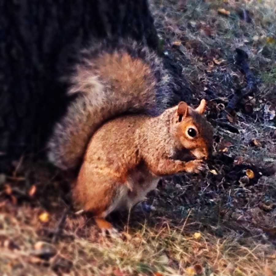 My friends think I'm weird because I will never tire of photographing squirrels.