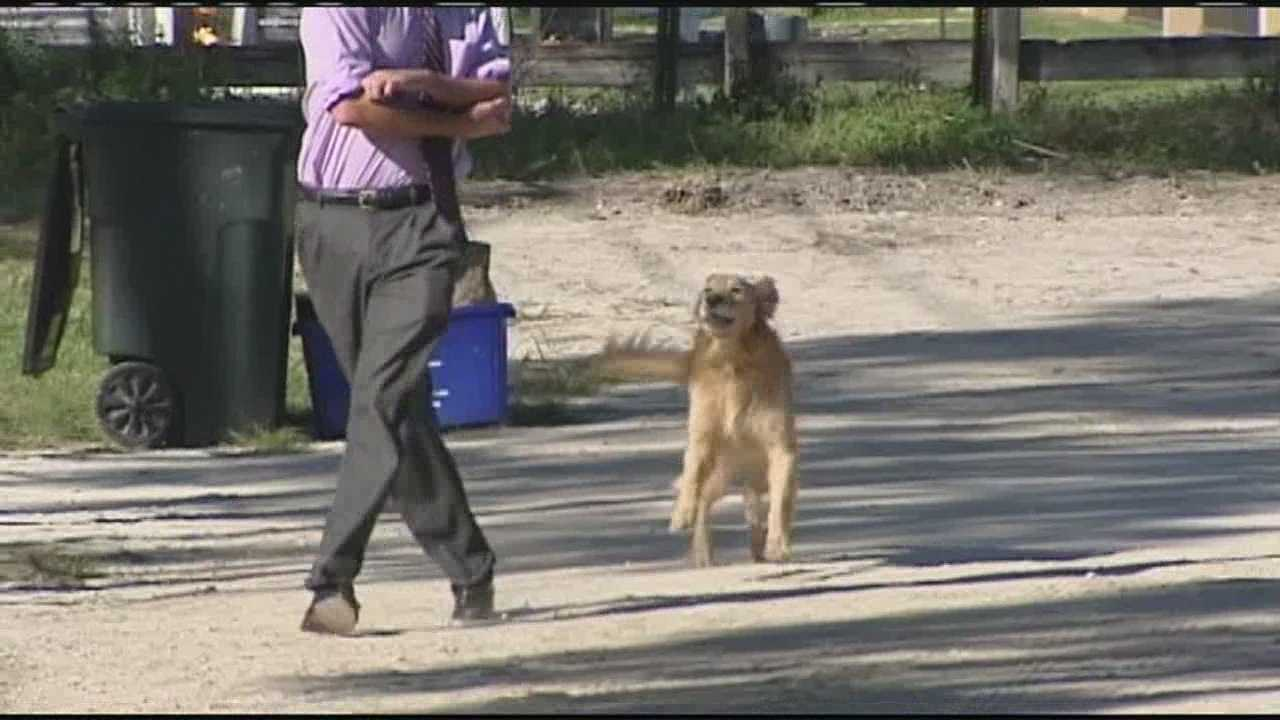 While WPBF 25 News' John Dzenitis was working on a story about two pit bulls that bit a boy, he was bitten by one of several loose dogs roaming the neighborhood.