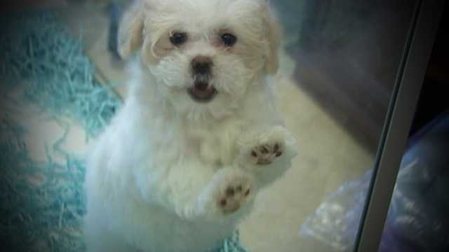 Wellington leaders voted Tuesday night to ban pet stores from selling puppies.