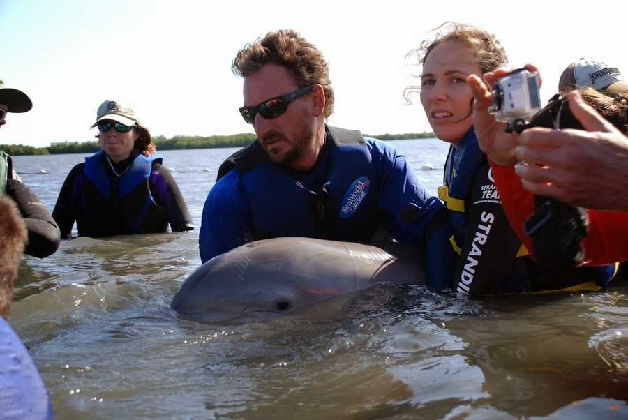 Just finding the dolphins was a challenge. (All photos provided by the Hubbs Sea World Research Institute)