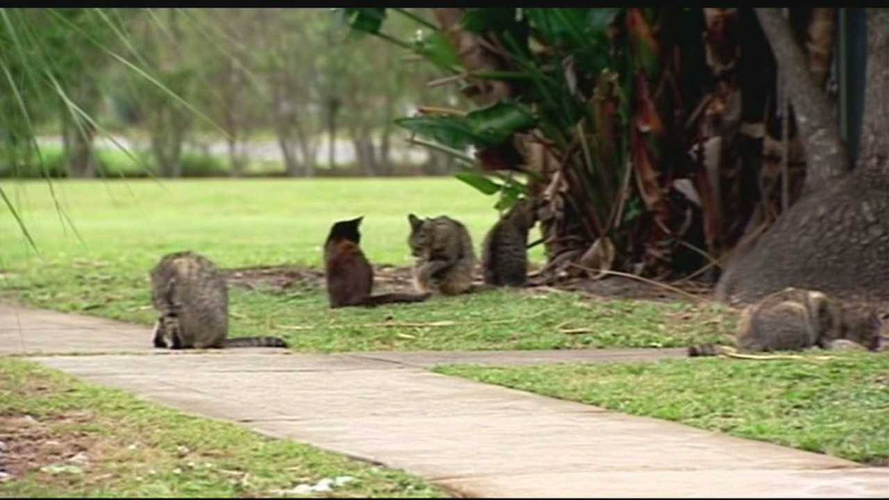 One Hypoluxo community has had enough of a feral cat colony and is now trapping them, sending them to Palm Beach County Animal Care and Control to be euthanized.