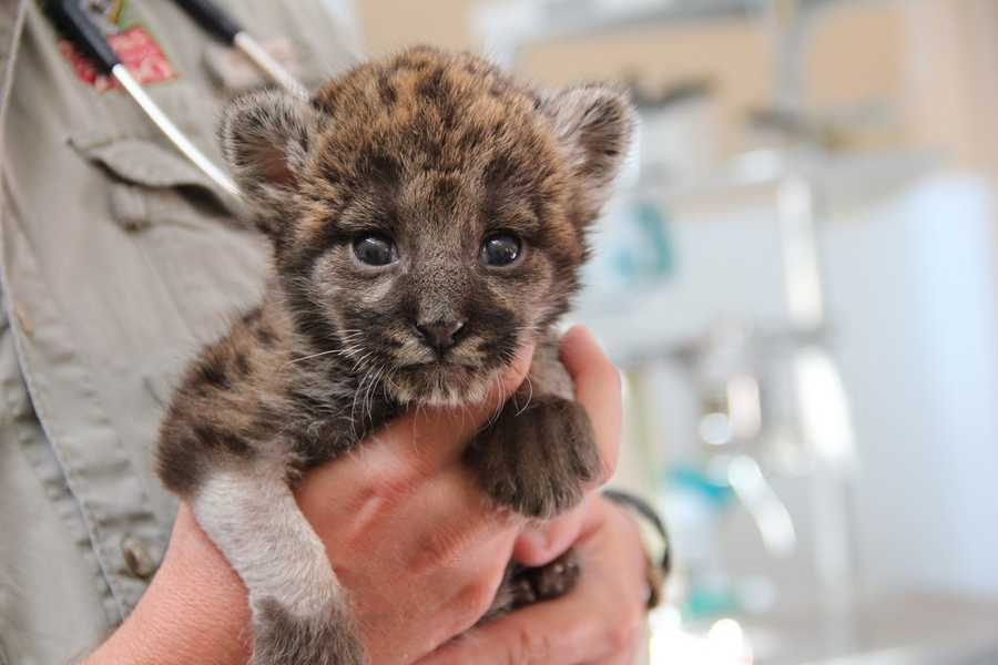 Click here to see more photos of this precious kitten!
