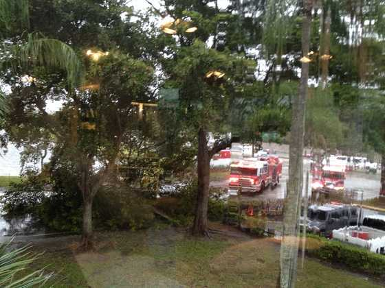 Tree falls in front of Delray Medical Center blocking entrance
