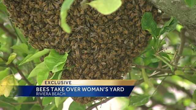 5,000 Bees