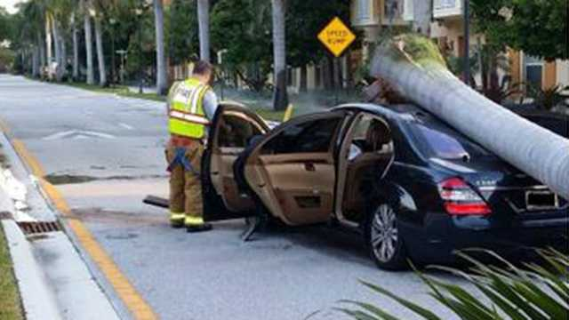 Police are looking for the owner of this car, who apparently left it abandoned in Boynton Beach after crashing it into a palm tree Wednesday morning.