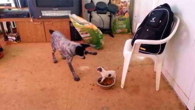 Youtube Screngrab Tiny Dog