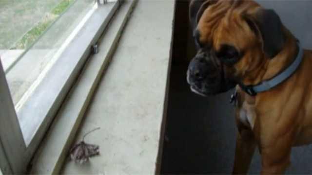 Dog leaf screengrab