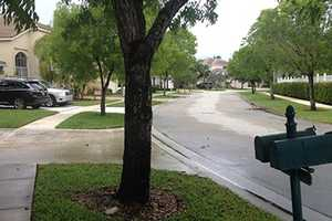 MAY 15: A local homeowners association says it needs to tear down some oak trees because of safety concerns, but at least one resident is vowing to fight it.