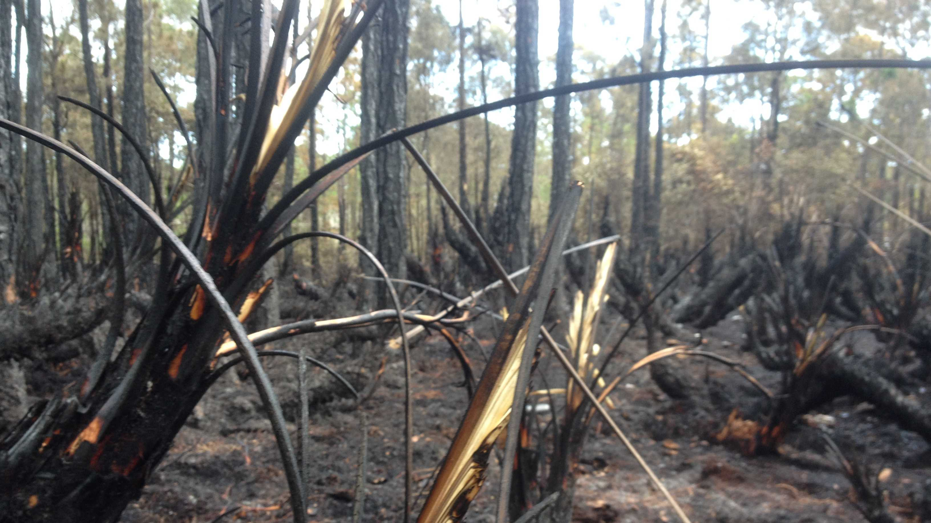 Firefighters are remaining extremely cautious after Wednesday's brush fire near Indrio Road in Fort Pierce, the site of a brush fire also in the same area last year.