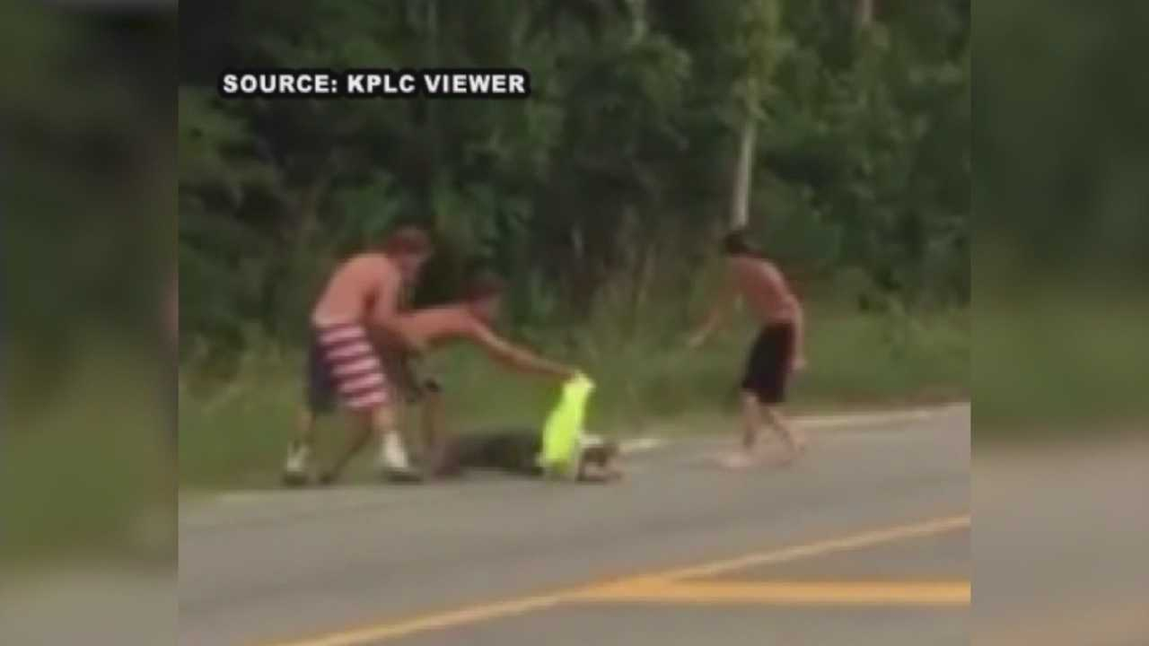 A Louisiana man received 80 stitches after he tried moving an alligator out of a roadway.