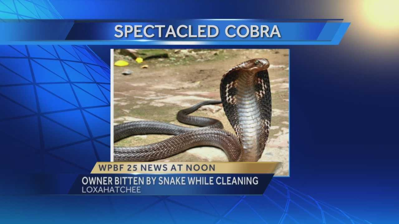Woman bitten by Cobra while cleaning cage