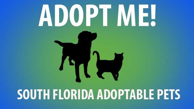 Each week we feature adoptable cats and dogs in search of a forever home here in South Florida. Take a look through this slideshow to find your new best friend!