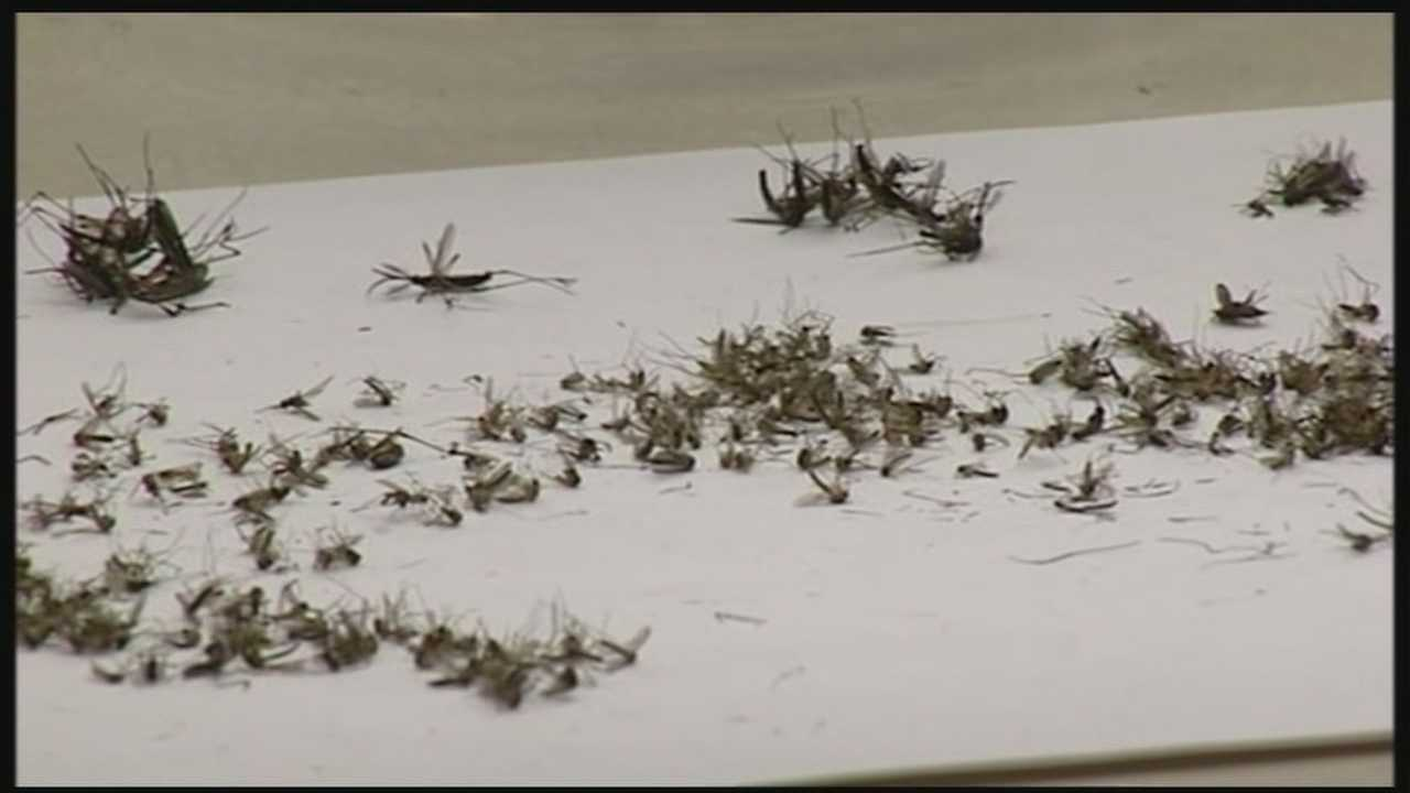 Palm Beach County officials are planning an aerial assault in effort to fight of mosquitoes.