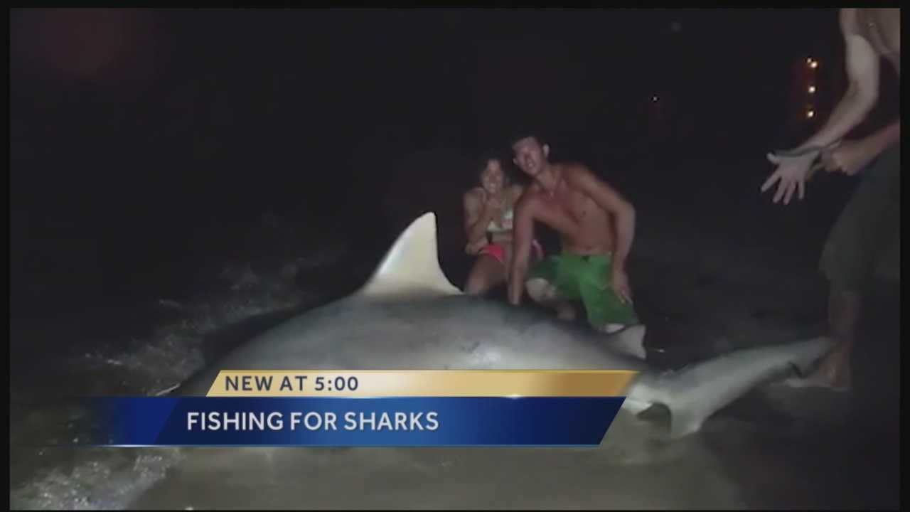 Earlier this month fishermen caught a 300 pound bull shark on Palm Beach! Reporter Erin Guy has the story.