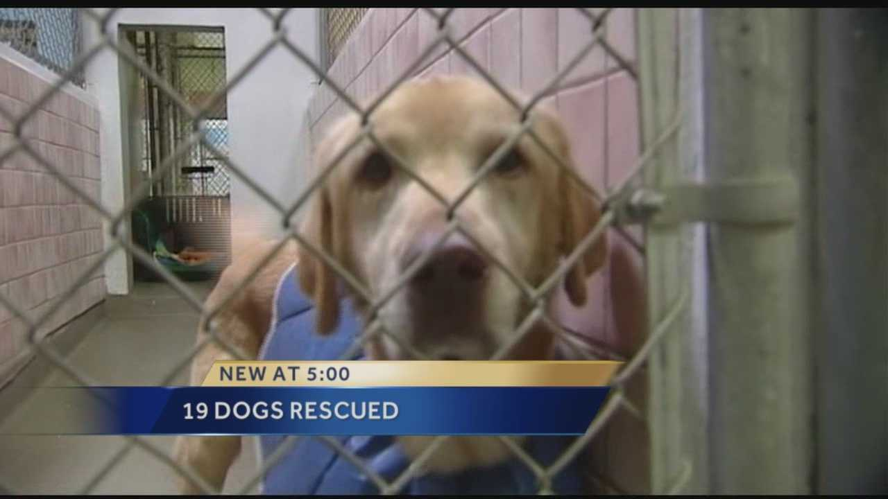 19 dogs recovering after rescue