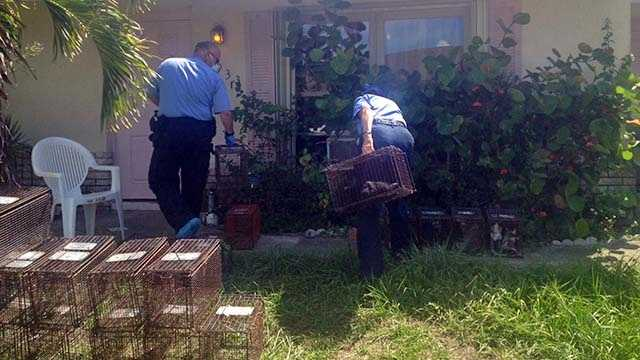 Crews responded Wednesday to a residence on Ithica Circle in Lake Worth where sources say dozens of dead cats were found in freezers and another 30 cats were found inside the home.
