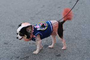 See some of the highlights from the 4th Annual Pup Crawl West Palm Beach – Downtown! The event took place on Sunday, September 28. Four-legged friends dressed in their furry finest!