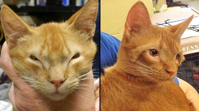 Local Cat Born Without Eyelids Gets Second Chance