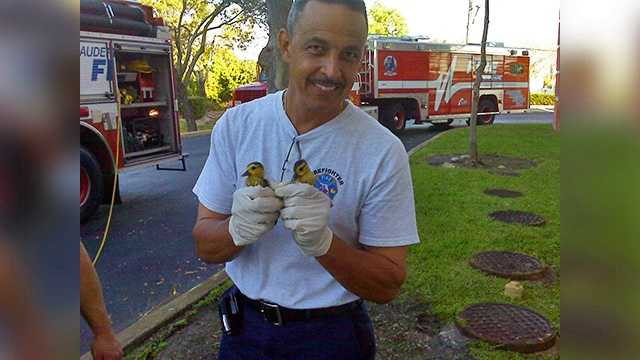 Firefighter Loiz with first 2 ducklings rescued.