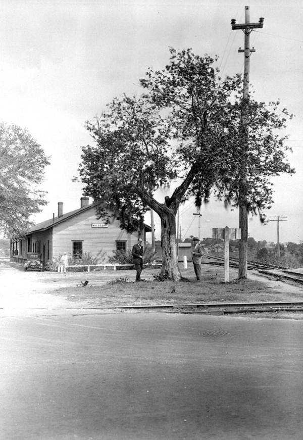 This tree in Mulberry, Florida is one from which public hangings in the past have taken place. Bullet holes are seen in the trunk.