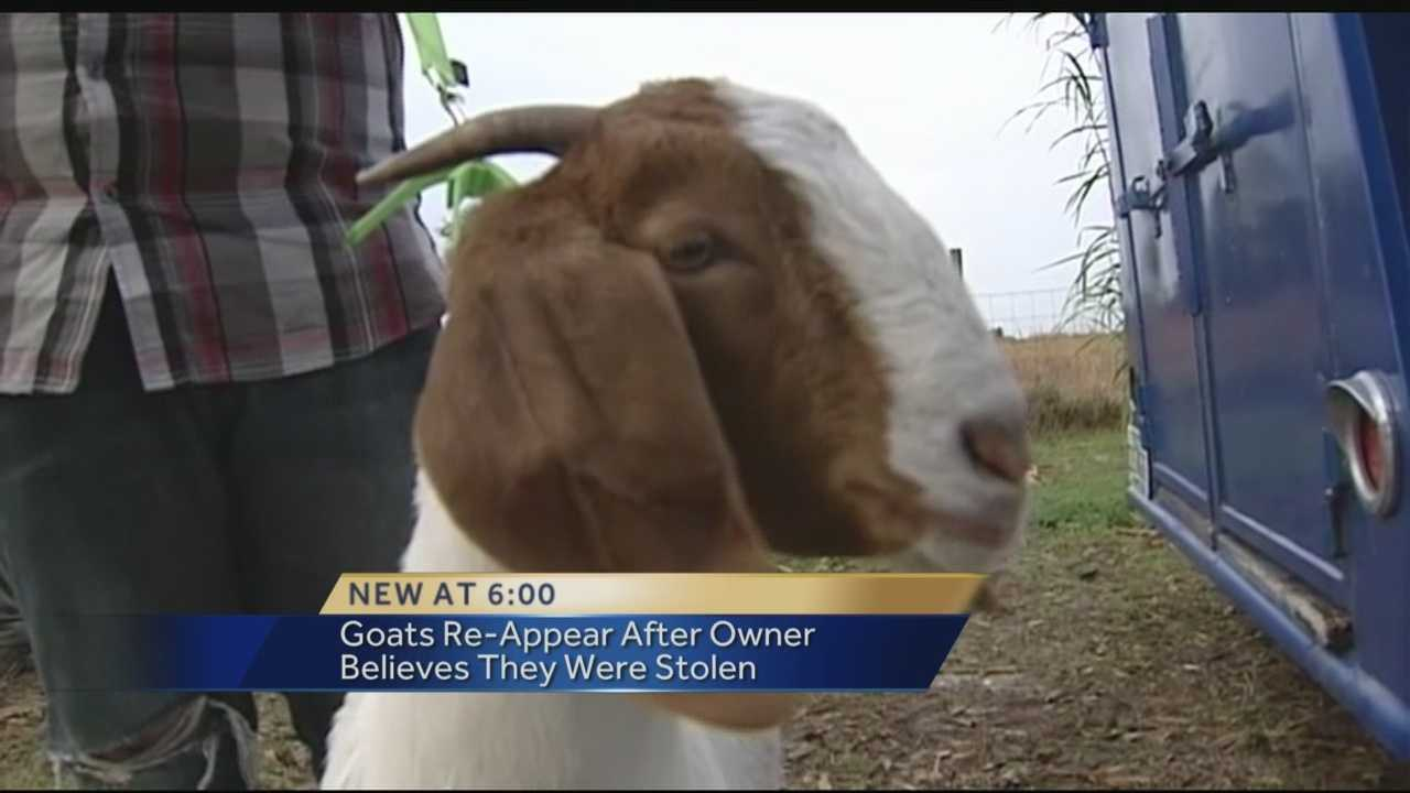 A family's prized and expensive show goats are back home after it was feared that rustlers had stolen them to eat. The Christmas family discovered that their two pedigree goats had been stolen out of their backyard barn on Northwest 12th Terrace on Sunday afternoon.