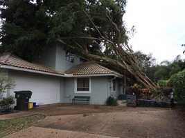 Photo tweeted by Cris Martinez:On the scene: #boca Uprooted tree on house #stormdamage #damagesurvey